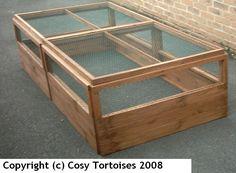 Cosy Tortoises