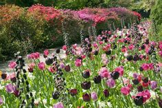 Tulip Art. With what colours will you paint the Garden ?