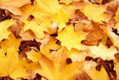 fall home preparation tips, cleaning tips, home decor, hvac, lighting, roofing