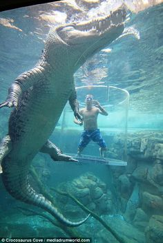Tourists swim with 16 foot saltwater crocodiles Scary Animals, Giant Animals, Nature Animals, Animals And Pets, Funny Animals, Cute Animals, Krokodil Tattoo, Saltwater Crocodile, Crocodile Rock