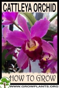 Cattleya Orchid, Moth Orchid, Orchid Care, Growing Orchids, Growing Plants, Colorful Flowers, Beautiful Flowers, Part Shade Plants, Vegetative Reproduction