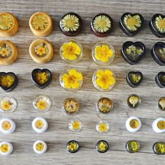 Plugs with real flowers in different sizes