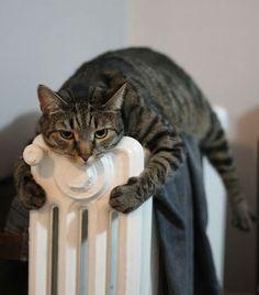 27 djur som bara vill ha lite värme. Nummer 14 är ju underbar! | Newsner