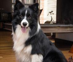 7 Consejos para tener mascotas felices