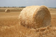 Big wheat straw bales can be seen in the field near Cuba, Kansas. Photo by Neil Croxton