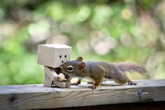 Danbo with squirrel♥