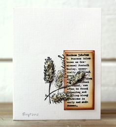 CAS162 Foxtail by Biggan - Cards and Paper Crafts at Splitcoaststampers
