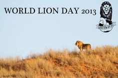 World Lion Day August 10th.  Protect the Lion from extinction!!