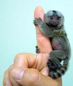 Cute Exotic Animals | Cute exotic baby animals born at zoos around the world | Amazing Data
