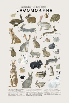 """Creatures of the order Lagomorpha,"" 2017. Art print of an illustration by Kelsey Oseid. This poster chronicles 30 rabbits, hares, and pikas from the taxonomic order Lagomorpha. Print measures 12x18 inches. Printed in Minneapolis on acid free 80# Mohawk Superfine cover. Packa"