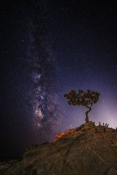 Tree of Life by Stergos Skulukas on 500px
