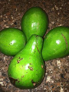 Aguacate! Avacado!! Producto de mi tierra, Puerto Rico. Heavenly delicious!