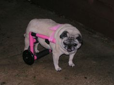dog wheelchair in Dog Supplies - I going to make this for my dog since she broke her leg and pelvis.