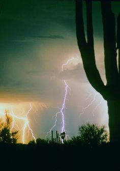 Giant Saguaro Cactus Lightning Storm - Fine art photography prints, decorative canvas prints, acrylic prints, metal Prints wall art  for sale on FineArtAmerica.com. Prints starting at $25. Copyright: James Bo Insogna
