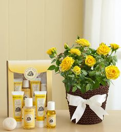 Burts Bees Baby Bee Gift Set - Yellow rose plant paired with a Burt's Bees Baby Bee Getting Started Kit featuring 100% natural bath essentials for baby like shampoo, soap and more. $39.99 #newbaby #babygifts #giftsforbabies
