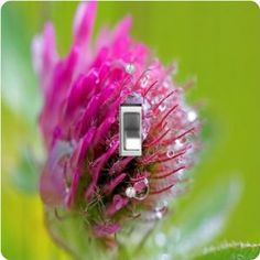 "Rikki KnightTM Red Clover Irish - Single Toggle Light Switch Cover by Rikki Knight. $13.99. The Red Clover Irish single toggle light switch cover is made of commercial vibrant quality masonite Hardboard that is cut into 5"" Square with 1'8"" thick material. The Beautiful Art Photo Reproduction is printed directly into the switch plate and not decoupaged which make these Light Switch Plates suitable for use in any room in the office, home, etc. etc.. These Light Switch Plates ..."