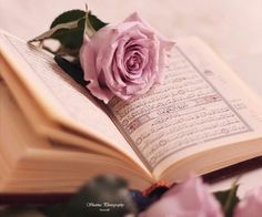 Inspiring image pink, quran, rose by winterkiss - Resolution - Find the image to your taste Islamic Wallpaper Hd, Quran Wallpaper, Beautiful Quran Quotes, Islamic Love Quotes, Duaa Islam, Islam Quran, Islamic Images, Islamic Pictures, Quran Sharif