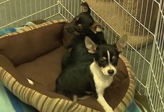 Two abandoned puppies found freezing inside backpack in Lancaster, PA