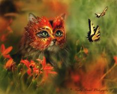 Learn more about photographer and artist Kathy Russell. See her magical Masked Kitties and learn how she finds inspiration. Photography tips included!