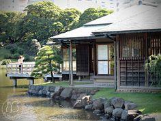 Oravanpesä | Japani 2011, Hamarikyu en.