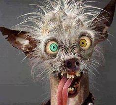 Hilarious, Funny & Sexy has members. Welkom by Afrikaner humor en witt, hilarious and funny pics (ADULTS Lees asseblief die reels van. Memes Humor, Funny Memes, Funny Quotes, Vape Memes, Funny Monday Memes, Humour Quotes, Weed Memes, Hilarious Jokes, Ugly Animals