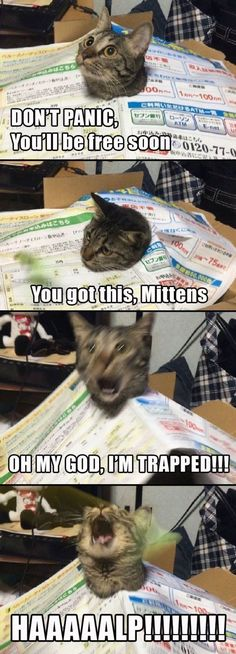 The five stages of grief, Cat Style. Mittens is starting to panic!