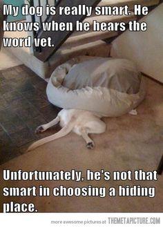 Don't disturb ninja dog…