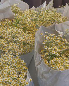 Nature Aesthetic, Flower Aesthetic, Aesthetic Yellow, Aesthetic Photo, Summer Aesthetic, Mellow Yellow, Pastel Yellow, Pretty Flowers, Aesthetic Pictures