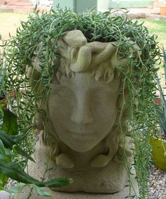 Medusa head planter rather awesome my succulent life by jdbh plants pinterest head - Medusa head planter ...