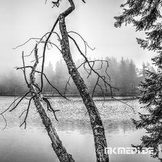 Markus Medinger Picture of the Day | Bild des Tages 22.10.2017 | www.mkmedi.de #mkmedi  Mummelsee im Schwarzwald  #schwarzwald #badenwuerttemberg #germany #deutschland  #schwarzweiss #blackwhite  #instagood #photography #photo #art #photographer #exposure #composition #focus #capture  #365picture #365DailyPicture #pictureoftheday #bilddestages #landscape  @badenwuerttemberg @visitbawu  @wirzeigens @baden.wuerttemberg