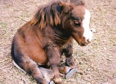 Thumbelina was born on May 1, 2001, to two miniature horse parents.