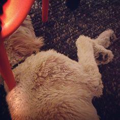 Shaggy dog. Shaggy rug. • Waldo