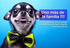 <p>Los perros como mascota siempre han existido y desde siempre han sido un foco de enfermedades cuando se traspasaron los roles de cada quién en el hogar. Estos maravillosos animales que tenemos en casa junto con otras mascotas toman a menudo un papel protagonista en nuestras vidas, tanto es así …</p>