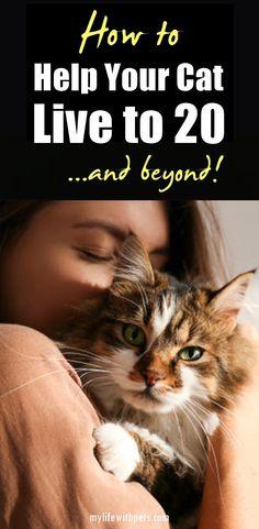 130 Cat Care Ideas In 2021 Cat Care Cat Care Tips Cat Health