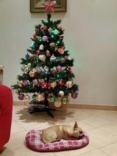 Yuki Noel....