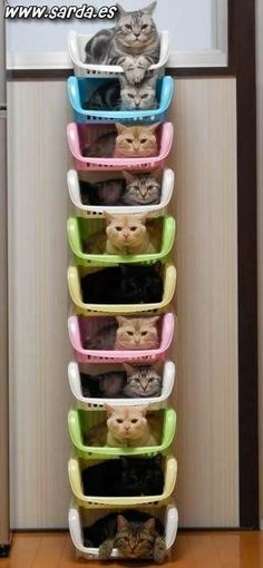 Functional storage for ALL of your cats!