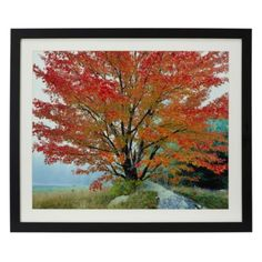 Wild Red Maple from Z Gallerie