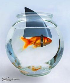 pretentious goldfish LOL