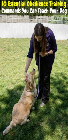 10 Essential Obedience Training Commands You Can Teach Your Dog dog obedience training dog commands training dog training tips puppy commands training how to teach y. Dog Commands Training, Puppy Obedience Training, Basic Dog Training, Training Your Puppy, Potty Training, Training Dogs, Training Quotes, Crate Training, Training Classes