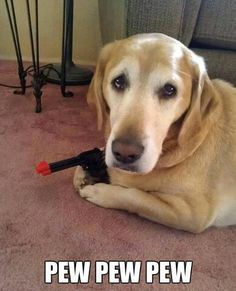 U know this dog looks a lot like my cousin... Wait he is!