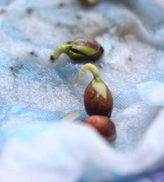 Citroenplant kweken uit een pitje. Hoe dan? - ENJOY! The Good Life Citroen Plant, Vegetable Garden, Garden Plants, Growing Greens, Permaculture, Garden Inspiration, Bonsai, Gardening Tips, Food To Make