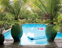 34 Swimming Pools You'll Want to Lounge In ASAP Vietnamese urns from East Hampton Gardens frame a view of the pool in designer Jill Morris's New Jersey house.<br> They're definitely Mermaid-approved. Patio Tropical, Modern Tropical, Potted Palms, Potted Palm Trees, Pool Plants, Hampton Garden, Pool Steps, Pool Wedding, Garden Frame