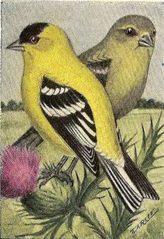 Landofnodstudios: Free Photo Friday- For the Birds ----several birds here