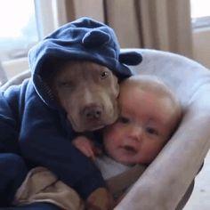 So Cute  #doggie #dogs #dogsgif #dog #pets #pet #funnygif