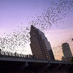 The Congress Avenue Bridge is home to 1.5 million bats who head out every night at dusk to grab some dinner. Like a cloud of black smoke, they come out from underneath and can be viewed from both above and below the bridge.