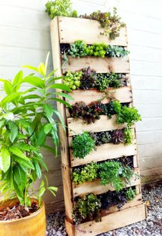 Ideas : Plastic Bottle Vertical Garden.  Paint Plastic bottle any color you want or leave clear.