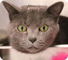 Meet Pixie, a cat for adoption.