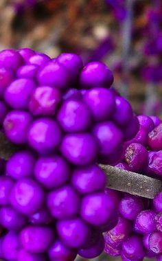 **color #colours #purple #colors