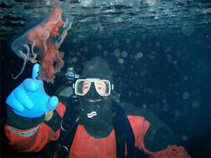 Dug Coons, research diver, reaches out to a jelly fish while diving in McMurdo Sound. The salt water remains at degrees C, which minimizes the length of time divers can remain under the sea ice to about 40 minutes. Sea Ice, Tide Pools, Manatee, Open Water, Salt And Water, Antarctica, Underwater Photography, Jellyfish, Snorkeling