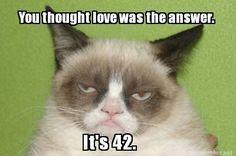 Grumpy Cat Meme Template | GRUMPY CAT Meme Photo (35215475) Fanpop